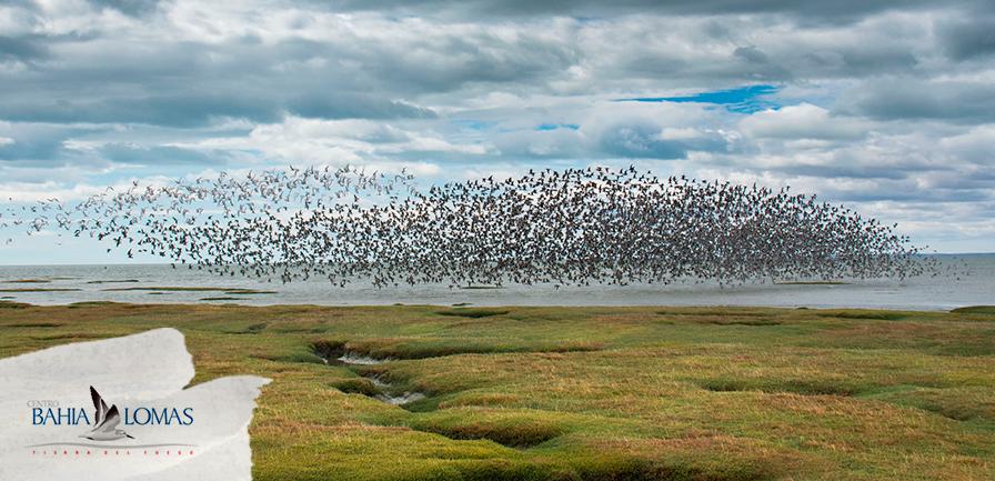 Bahía Lomas - Santuario de la Naturaleza